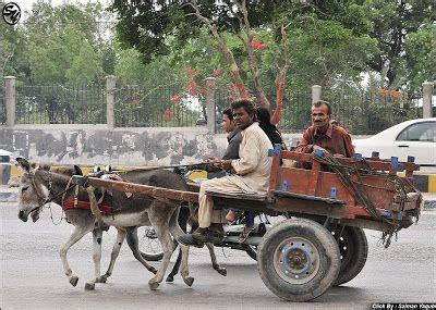 pin  ockert groenewald  donkey carts pinterest donkey