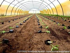 Arrosage Des Tomates : plantation des tomates la ferme du hanneton ~ Carolinahurricanesstore.com Idées de Décoration