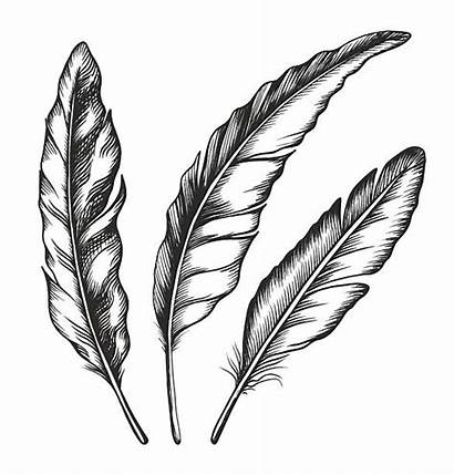 Feather Illustration Vector Feathers Clip Crow Illustrations