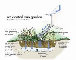 Garden Guru  Rain Gardens