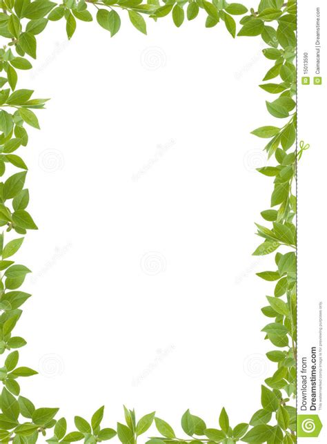 framing leaves green leaves frame stock illustration illustration of culture 15013590