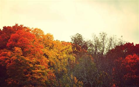 Fall Backgrounds Computer Aesthetic by Autumn Sodora