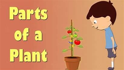 Plants Plant Parts Grade Kindergarten Science Functions