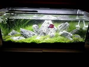Welches Navi Kaufen : welches aquarium kaufen aquascaping einsteiger ~ Kayakingforconservation.com Haus und Dekorationen