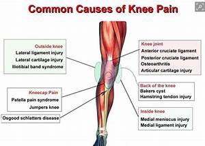 Knee Anatomy Examination