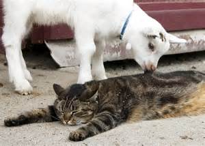 farm cats with cats