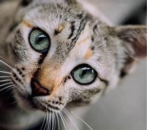 Recht Auf Rechnung : katzenfutter auf rechnung bestellen bersicht der top shops ~ Themetempest.com Abrechnung