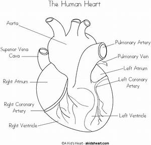 The Human Heart Coloring Page
