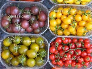 Plant Tomate Cerise : plants potagers ~ Melissatoandfro.com Idées de Décoration