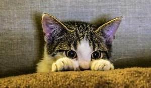 Katzen Fernhalten Von Möbeln : was tun wenn katzen kratzen zooroyal magazin ~ Sanjose-hotels-ca.com Haus und Dekorationen