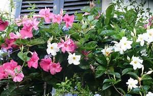 Plantes En Pot Pour Terrasse : fleurs en pots pour balcon et terrasse my little jardin ~ Dailycaller-alerts.com Idées de Décoration
