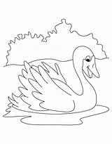 Coloring Swan Pages Colouring Cute Printable Print Lake Animals Getcolorings sketch template