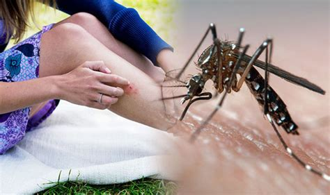 stop  mosquito bite  itching apply  cold