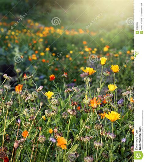 Herbst Gartenblumen by Herbstliche Gartenblumen Lizenzfreies Stockfoto Bild