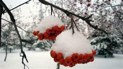 Wallpapers Desktop Snow Stunning Snowfall Ashberry Wallpapertag