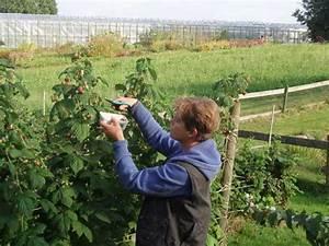 Asche Gut Für Pflanzen : gem seg rtnerei breklingfeld die g rtnerei kr uter heidelbeeren pfel ~ Markanthonyermac.com Haus und Dekorationen