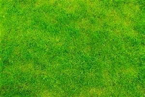 Braune Stellen Im Rasen : rasen wird braun das k nnen sie tun ~ Lizthompson.info Haus und Dekorationen