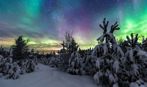 stunning pictures show snow covered trees lit