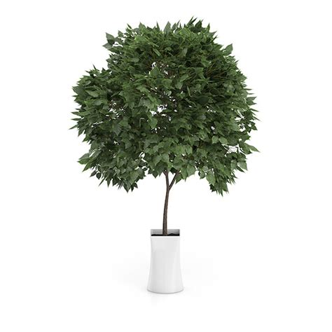 small tree in white pot by cgaxis 3docean
