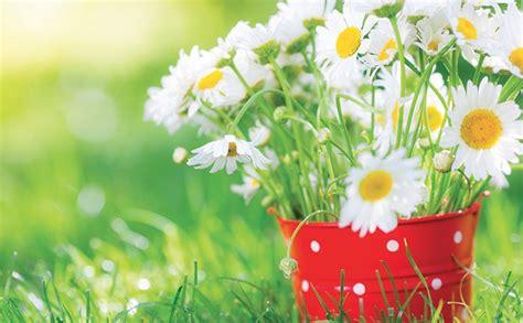 bio cuisine l eau le printemps et les fleurs santé naturelle bio