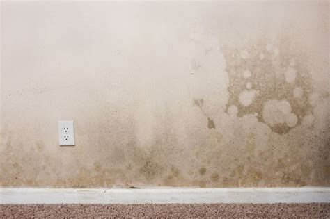 mold proof drywall mold resistant drywall guarantees a mold free house