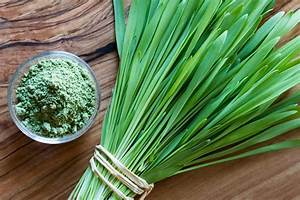 Barley Grass  Discover Our Herb Of The Month
