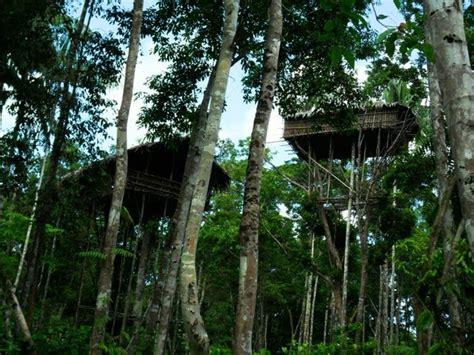 suku rumah pohon korowai  kombai bumi nusantara