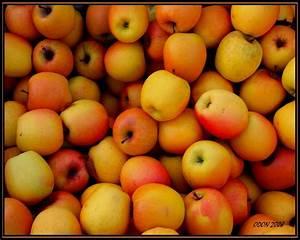 Caisse De Pomme : caisse de pommes odon passion photo ~ Teatrodelosmanantiales.com Idées de Décoration