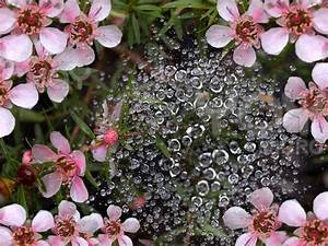 Beautiful Flowers with Rain Water Drops - PICTURE POOL