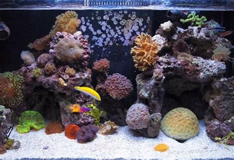 types  saltwater tanks fish  fowlr  reef tanks