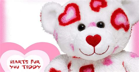 lovely  beautiful teddy bear wallpapers allfreshwallpaper