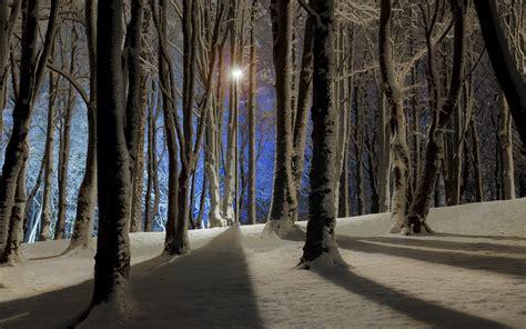 crisp winter forest  night wallpaper