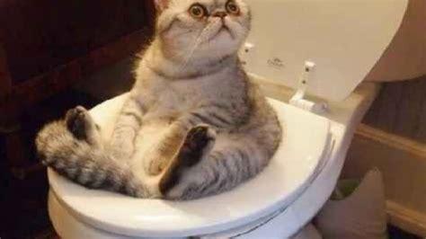 Husky Studio The Funniest Cat Kitten Videos  Funny Cats