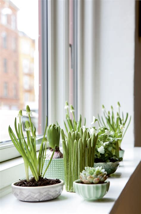 Gardening Indoors by 12 Creative Indoor Garden Ideas For Your Home Decor
