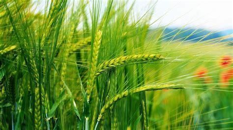 COVID-19: Земеделските производители успокояват обществото ...