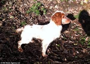 Hampshire Police Hope To Collar Gang Behind Theft Of Three Er Spaniels Worth Up To