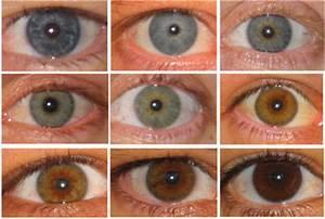 Yann Klimentidis' Weblog: OCA2 and eye color