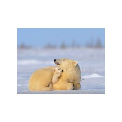 Wapusk National Park Canada -- Geographic