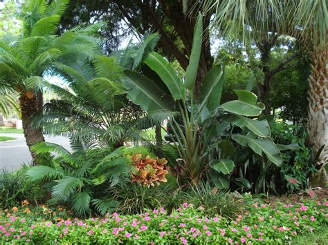 tropical gardens images tropical garden wallpapers pictures of tropical plants