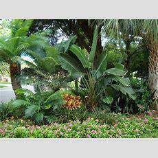 Tropical Foliage Wallpaper Wallpapersafari