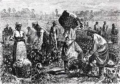 Slaves Cotton Fields Working Picking Plantation History