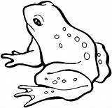 Coloring Frog Frogs Pages Printable sketch template