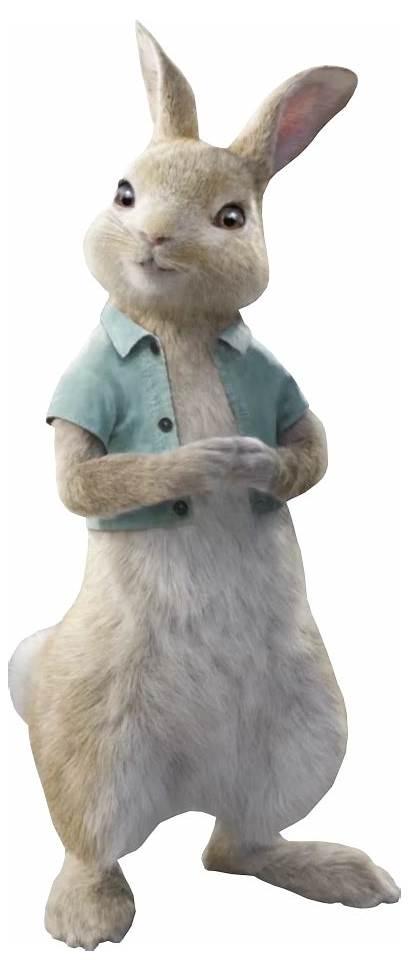 Cottontail Rabbit Wiki Movie Sony Peter Wikia