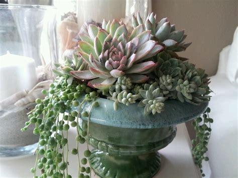 925 Best Succulent Arrangements Images On Pinterest