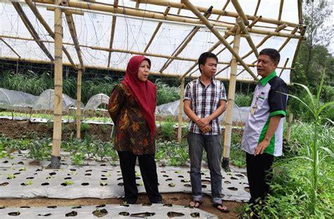 petani milenial bangga kembangkan sayuran organik monitor