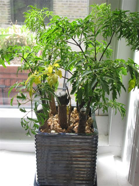 orson stroble identifying house plant