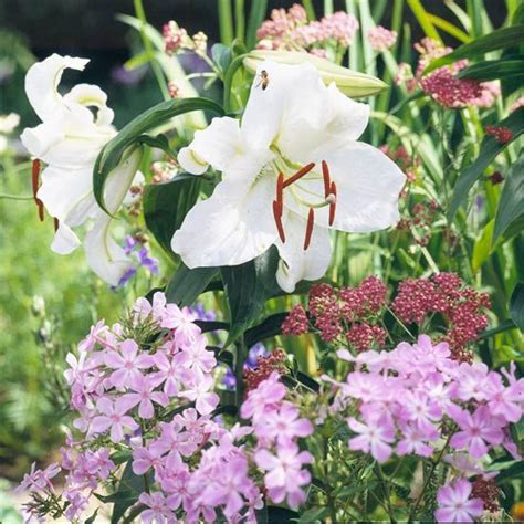 Best Fragrant Flowers For The Northwest  Gardens, Sweet