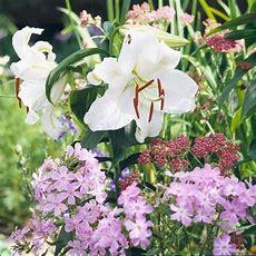 Best Fragrant Flowers For The Northwest  Gardens, Sweet