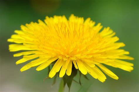 hermosa flor amarilla imagen