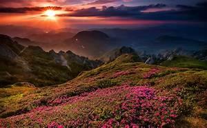 sunset, flowers, beautiful, mountains, sky, wildflowers ...